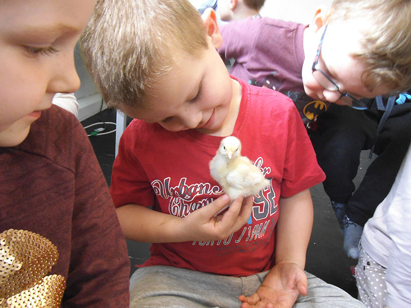 child holding a chick